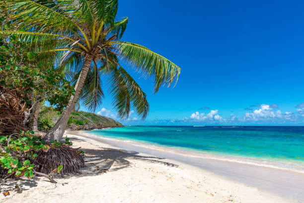 View of nice tropical beach with palm tree